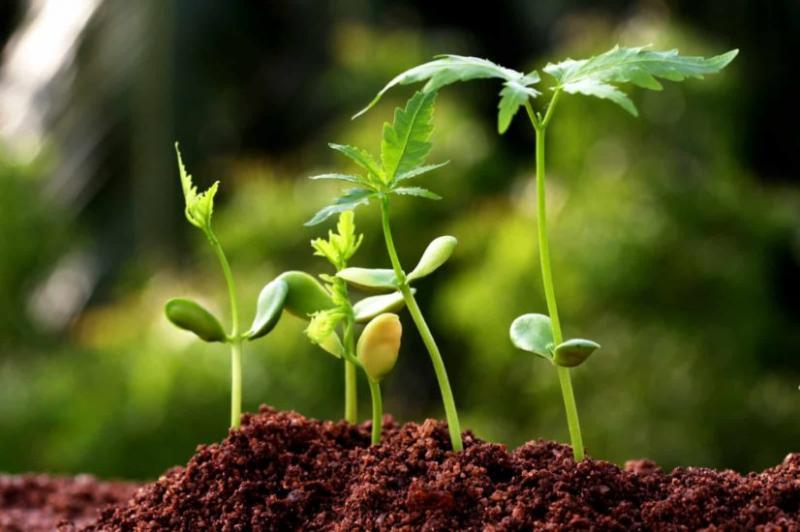 Food Biotechnology Market