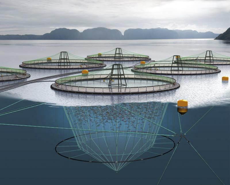 Fishing Nets and Aquaculture Cages Market Business