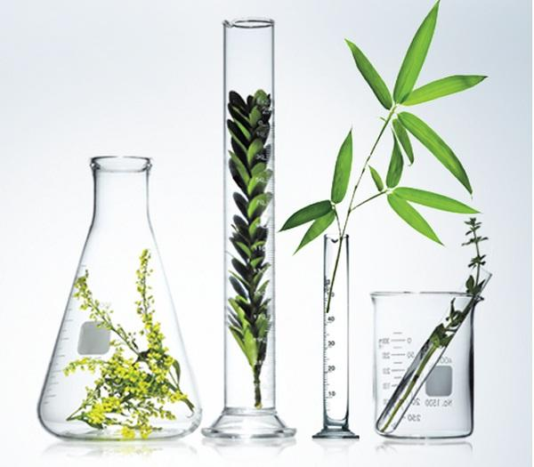 Active Ingredients Market