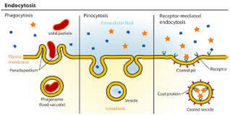 Lysosomal Disease Treatment Market