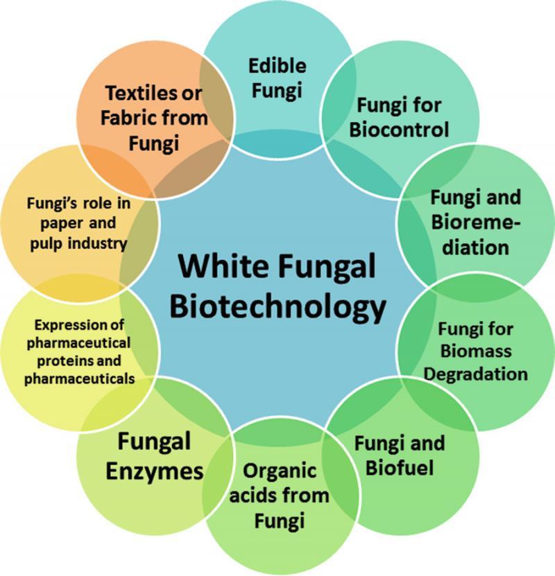 Marché de la biotechnologie blanche 2020