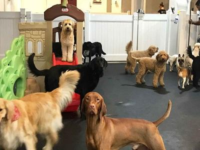 Pet Daycare and Lodging Market
