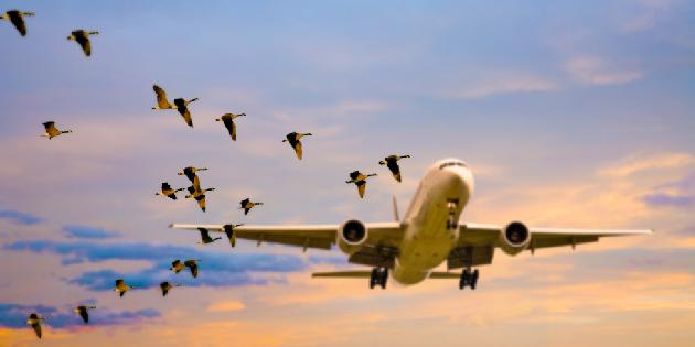 Bird Detection System Market with Top Countries Data, Explores