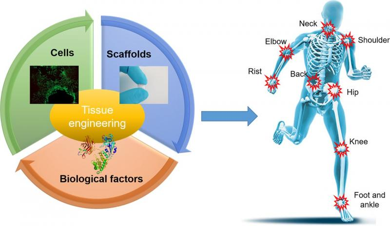 Tissue Engineering Market