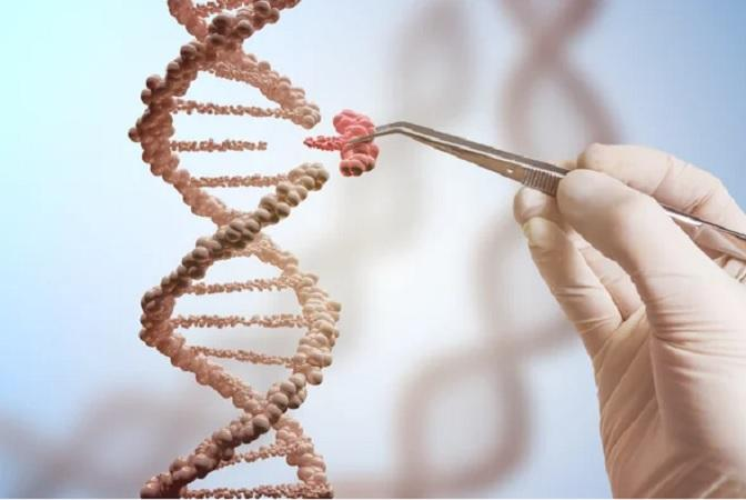 Gene Editing Tool Market