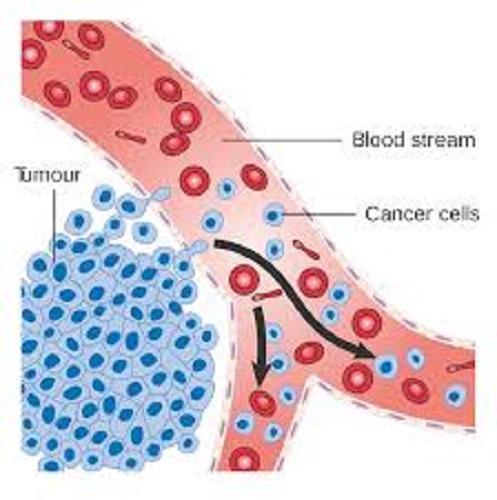 Cancer Immunotherapies Market