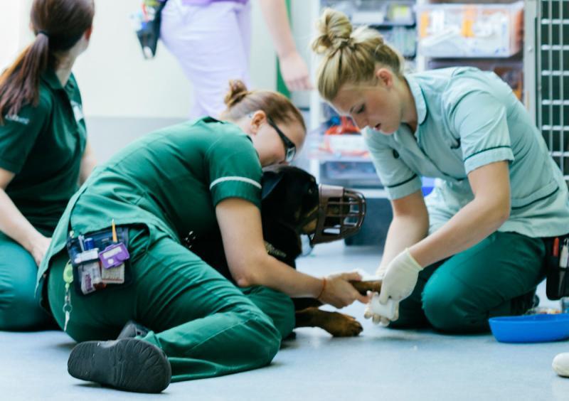 Veterinary Telemedicine Platform