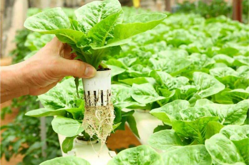 Hydroponics Market Insights Offered In A Recent Report | Argus
