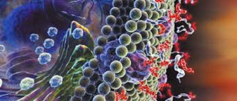 Glycobiology  Market