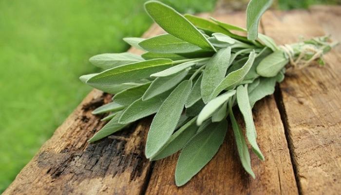 Sage Extract Market