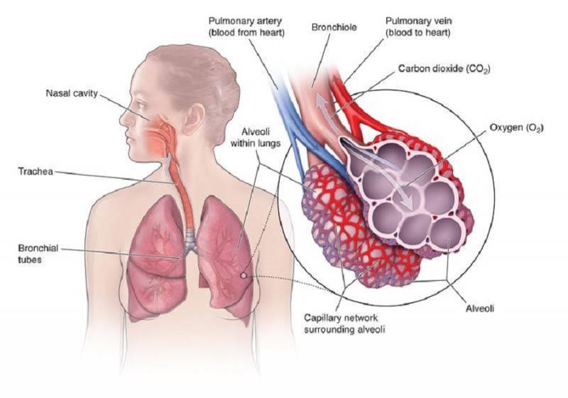Hospital-Acquired Pneumonia Prevention Market