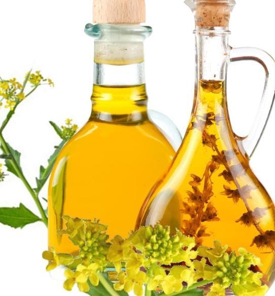 Global Camelina Sativa Oil Market Huge Growth Opportunity