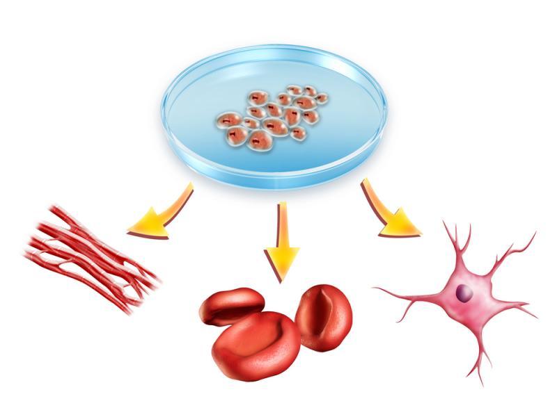 Coronavirus, le modèle Asti à étudier et à propager