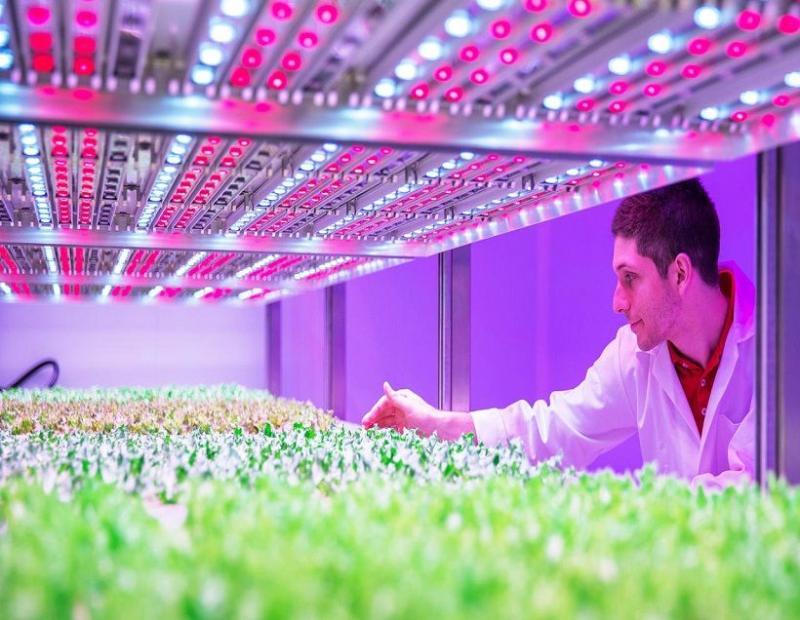 Agricultural Plant Growth LED Lights Market