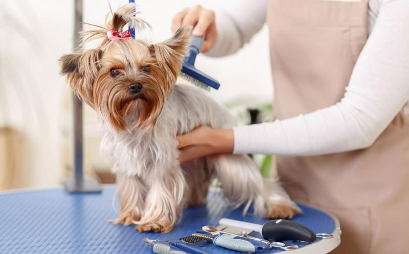 Pet Grooming Services Market to Worth with an Incredible Growth
