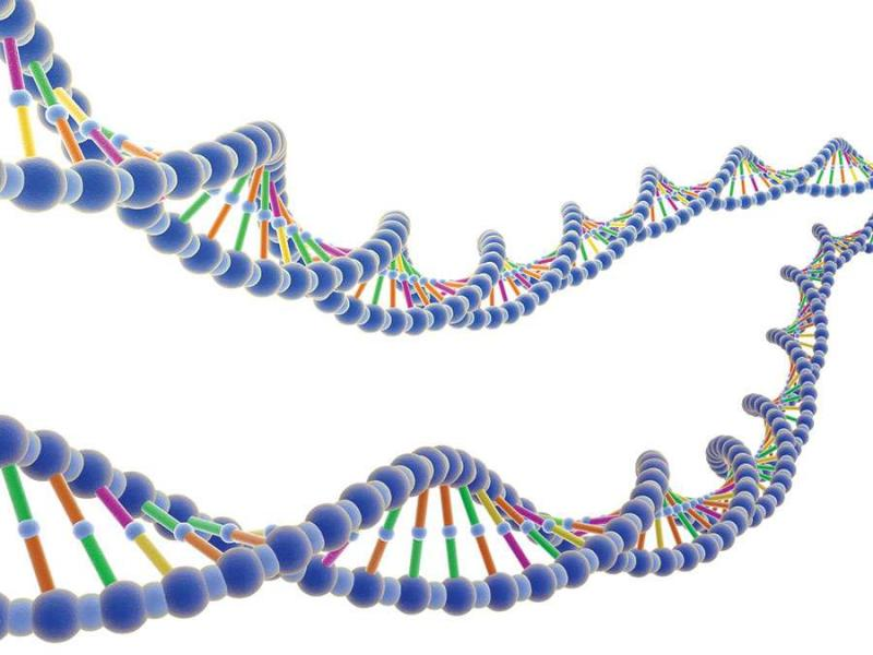 DNA Microarray for Agriculture Market Growth Analysis, Market