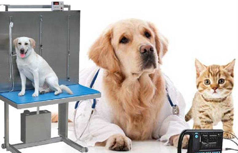Veterinary Equipment and Disposables Market 2020 Growth