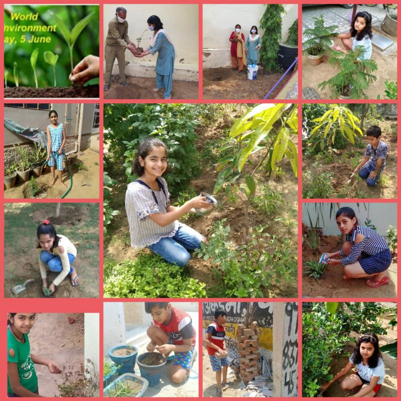 JMA Pilani Rajasthan Celebrates UN World Environment Day WED 2020 with Theme Save Earth Plant Trees Say No to Plastic