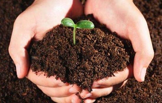 Natural Fertilizer Market