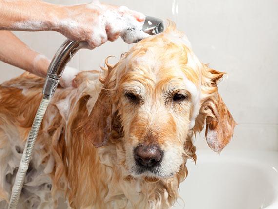 Animal Shampoo Market