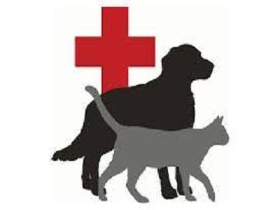 Animal Pharmaceutical Market