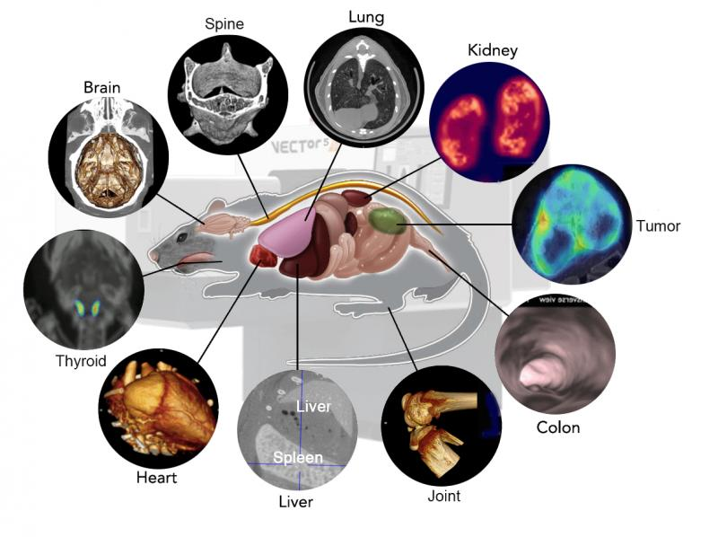 Preclinical Optical Imaging System Market: Competitive