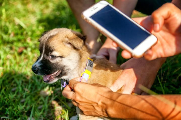 Smart Connected Pet Collar Market