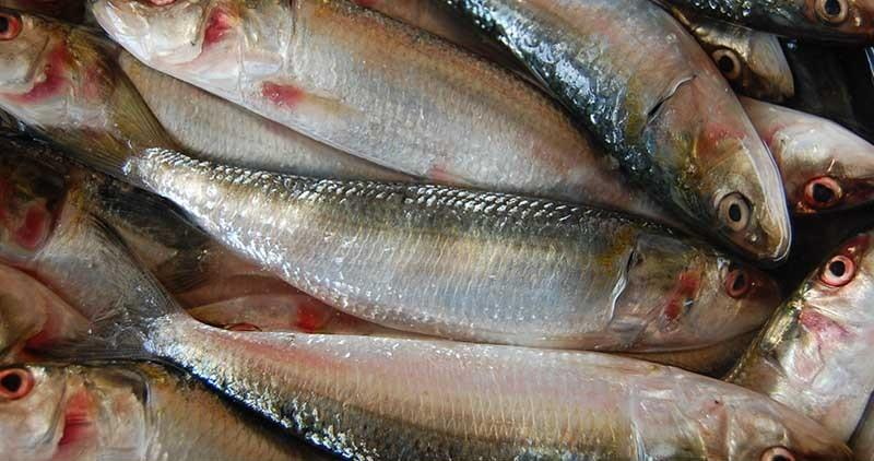 The global sardine market size reached 3.54 Million Tons in 2019.