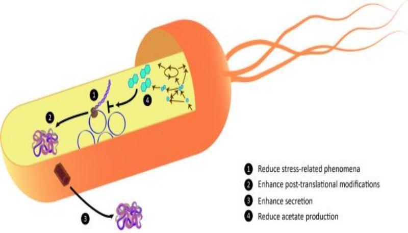 Recombinant Protein Market