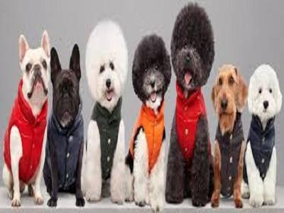 Dog's Fashion Market