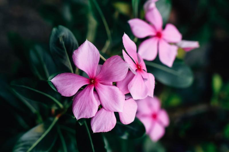 Vinca Alkaloid Market to Witness Robust Expansion by 2025