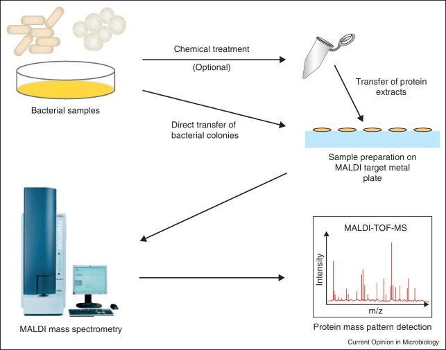 Microbial Mass Spectrometry Market Size, Share, Development