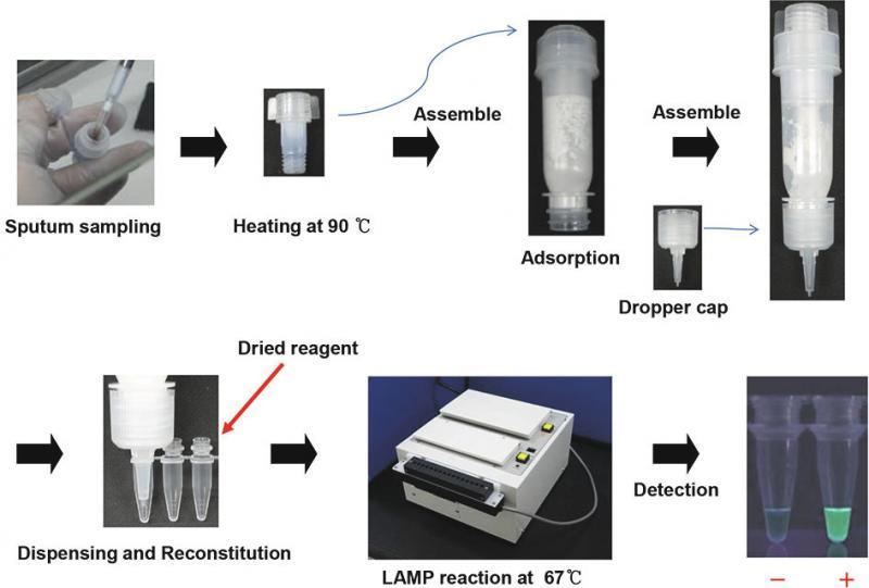 Medical Loop-mediated Isothermal Amplification (LAMP) Kit