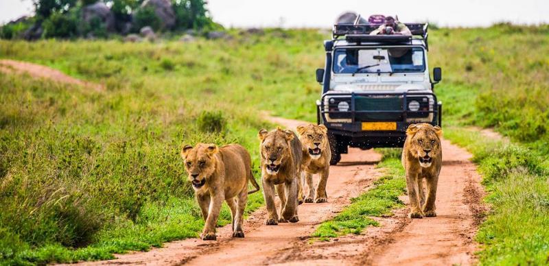 Marché du tourisme de safari de luxe