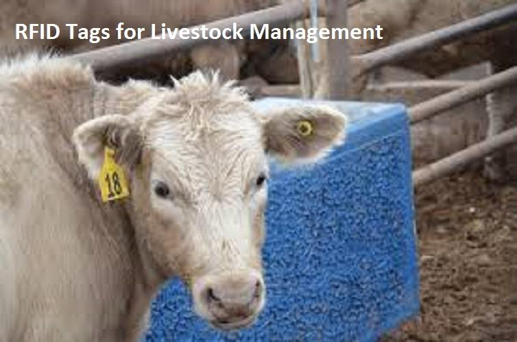 RFID Tags for Livestock Management