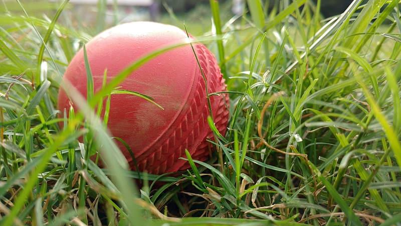 Cricket Equipment Market
