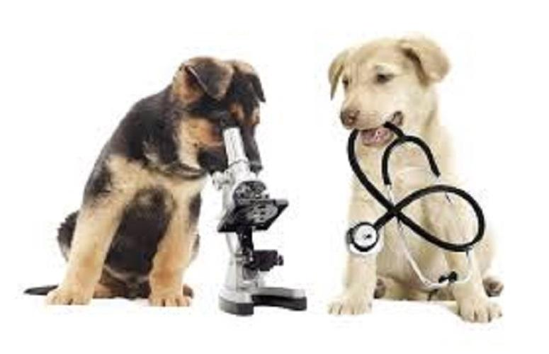 Veterinary Equipment and Disposables