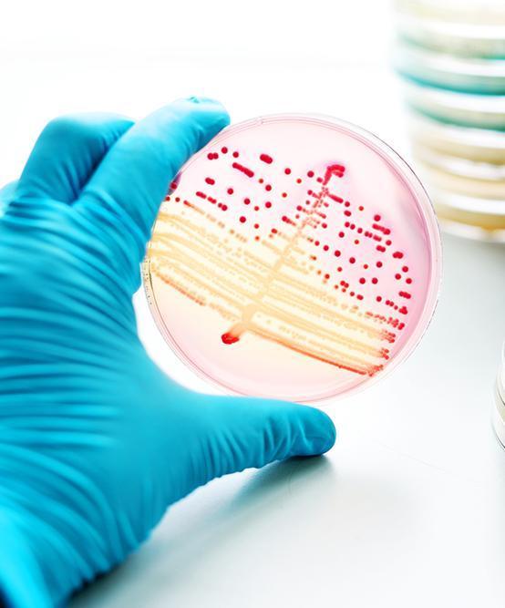 Burkholderia Infections Market