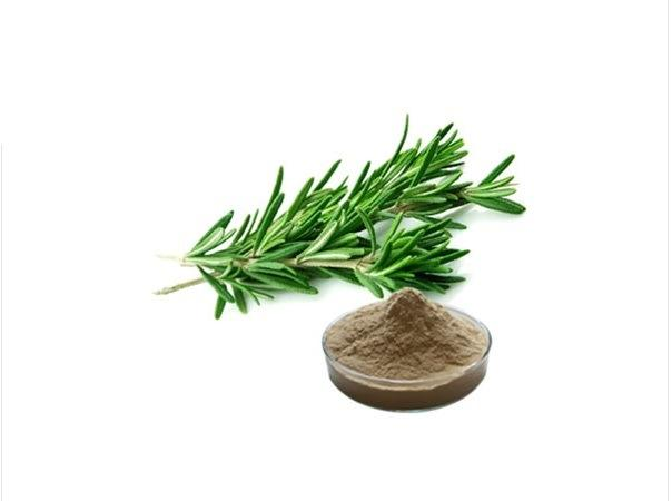 Rosemary Extract Market Size, Share, Development by 2025