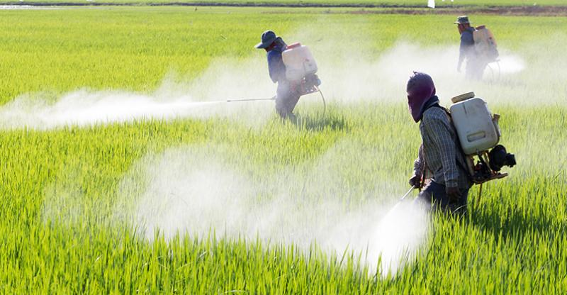 Agricultural Chemicals Market 2020 Global Share, Business
