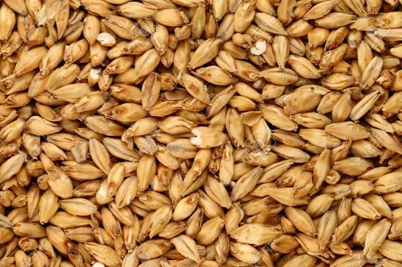 Global Malted Barley Market Growth Data Analysis 2020-2025