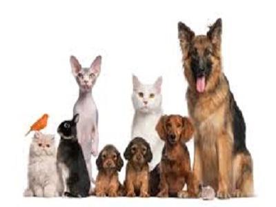 Pet Sitting Market