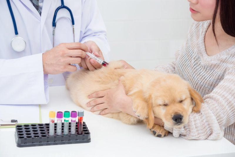 Veterinary Wellness Market Analysis, Segmentation, Key