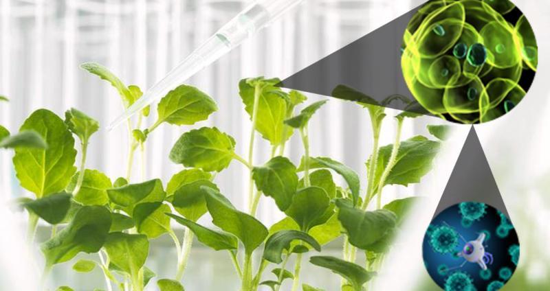 Agricultural Nanotechnology Market