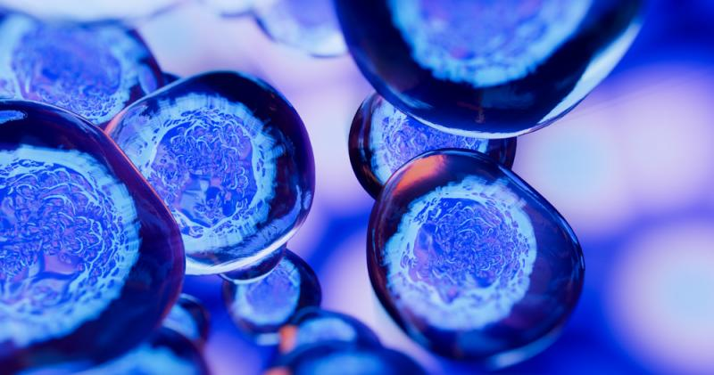 Global Algal Protein Expression System Market 2020 Top Industry