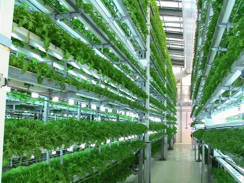 Aeroponics Farming , Aeroponics Farming Market Demand, Aeroponics Farming Market Forecast, Aeroponics Farming Market Outlook, Aero