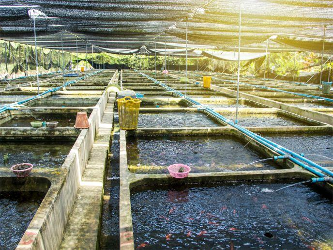 Water Treatment for Aquaculture Market Updated Research