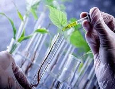 Global Biobased Polypropylene (PP) Market 2020 Growth Analysis