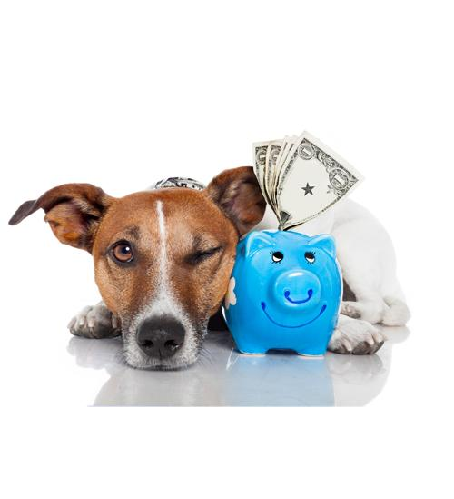 Global Pet Insurance Market 2020:Analysis, Size, Industry