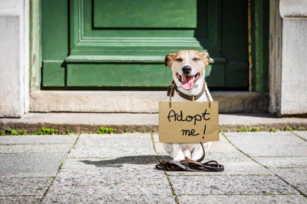 Pet Adoption Market